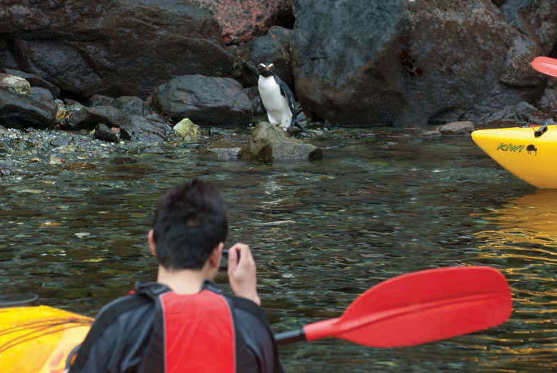 Cruise-Kayak-Milford-Sound-1